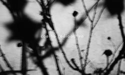 Coelho Radioactivo – Canções Mortas